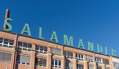 Salamander_01
